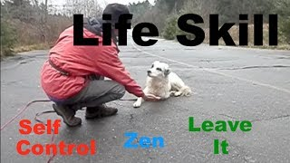 Self Control In Dogs: Zen, Leave It, Impulse  Training A Life Skill
