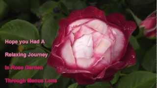 Beautiful Regent's Park In London - Queen Mary's Rose Garden