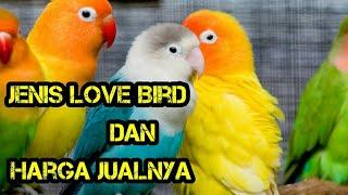 macam macam love bird dan harganya