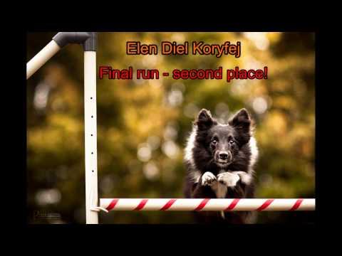 Eli a Gira - Agility Collie & Sheltie Cup 2016