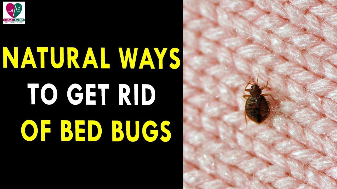Natural Ways To Get Rid Of Bed Bugs    Health Sutra - Best Health ...