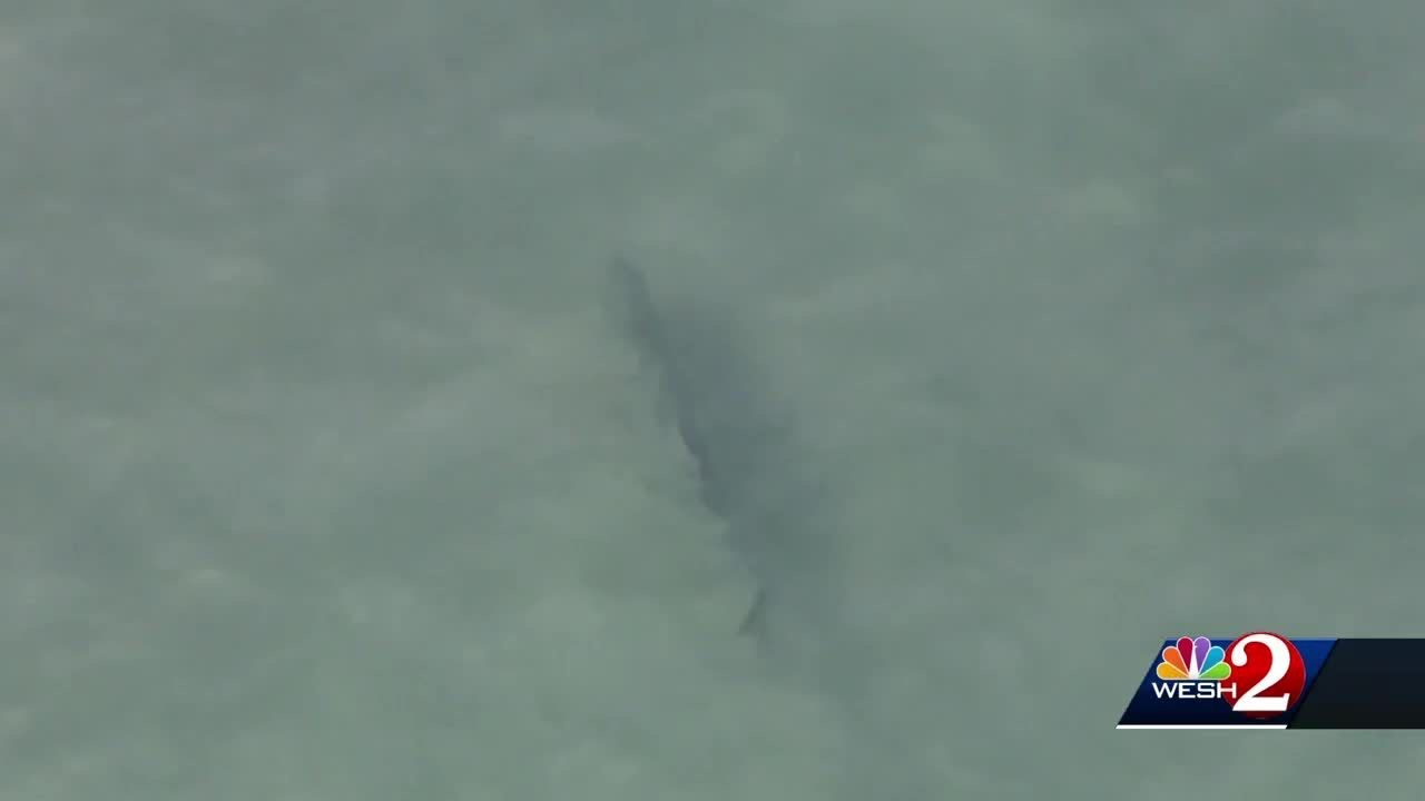 Sharks Spotted Close To Swimmers In