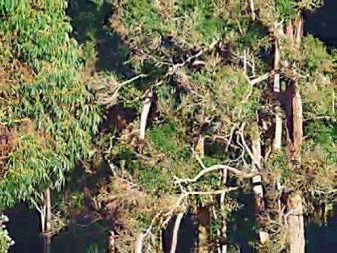 Clover Cottage - Warren River - Western Australia