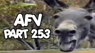 ☺ AFV Part 253 (NEW!) America