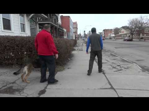 Aggressive German Shepherd Hand Off | Dog Training with Tyler Muto