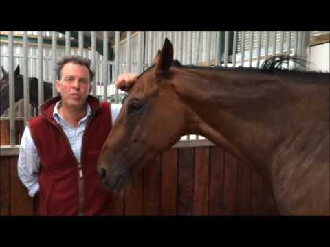 Tom George with Aintree & Punchestown Festival scorer God's Own
