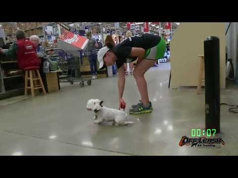 """2.5 Year Old Maltese """"Wilson"""" Before/After Video  