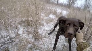 #5 Зимняя Ходовая Охота Курцхаар