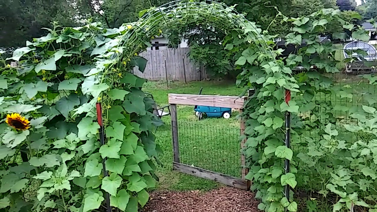 Cattle Panel Arch For Cucumbers And Green Beans Youtube