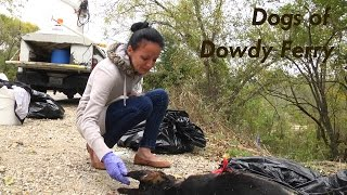 Dogs of Dowdy Ferry Trailer (Graphic Version)