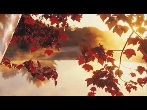 Красивая осенняя природа и девушки Сергей Чекалин Осень