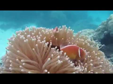 Scuba Diving The Great Barrier Reef Cairns Australia (Agincourt Reef)