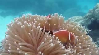 Scuba Diving the Great Barrier Reef Cairns Australia (Agincourt Reef)