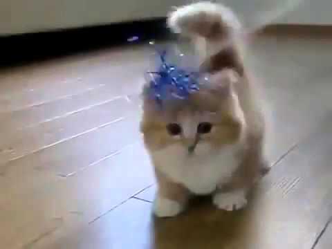 Anak Kucing Top First Paling Comel Di Dunia Memang Cute Giler Youtube