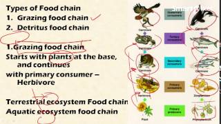 2.2 Food chain and food web: Environment and ecology [Learn Online]