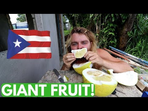 Chores Before I Leave Puerto Rico || Vlog #138 of 365