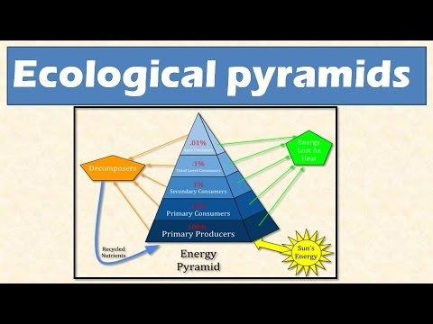 2.3 Ecological pyramids: Pyramid of numbers, biomass and ...