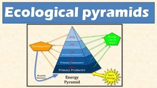 2.3 Ecological pyramids: Pyramid of numbers, biomass and Energy : Learn Online thumbnail