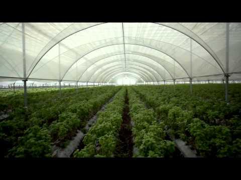 Sunfest Organic Herb Farm