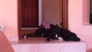 Собаки пидарасы