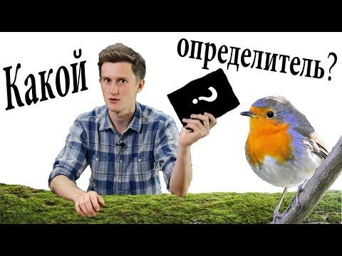 Как выбрать определитель птиц?