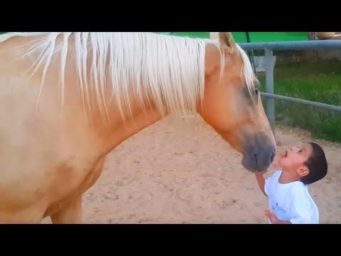 Der Junge Mit Williams Syndrom Trifft Auf Das Pferd, Danach Passiert Etwas Unerwartetes!