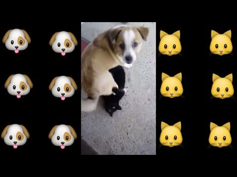 Dog vs Cat Fight - Cat and Dog Funny Fight