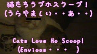 レイとあいラブホスクープ【かわいい子猫のおもしろい動画】・Rei and Ai Love Hob Scoop 【Cute kittens' funny video】