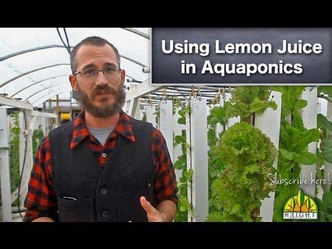 Using Lemon Juice in Aquaponics