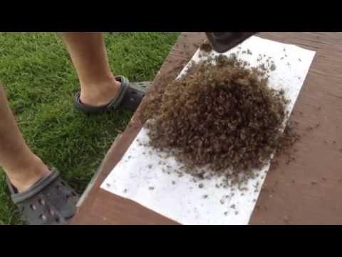 Mosquito Magnet HORROR !!!