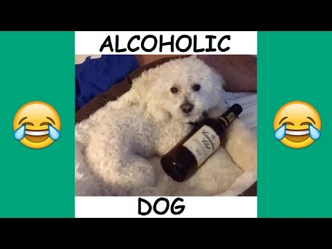 Quincy and Patrick Barnes Vine Compilation - BEST Patrick and Quincy Vines and Instagram Videos 2017
