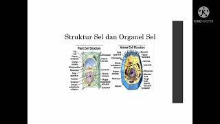 SEL ( struktur, organel, transfor)