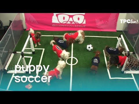 TPC Live! Puppies Play Soccer (Pup Cup 2019) | The Pet Collective
