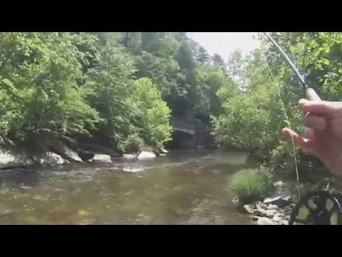 Nick fly fishing pisgah national forest davidson river for Davidson river fishing report
