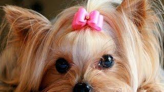 Стрижки груминг салон для собак Кременчуг контакты недорого цены(Стрижки груминг салон для собак Кременчуг контакты недорого цены стрижки для собак Кременчуг недорого..., 2016-03-23T10:39:57.000Z)