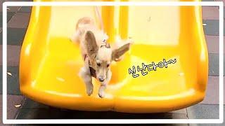 CLIP) 미끄럼틀을 사랑하는 강아지 / 고양이 같은 …