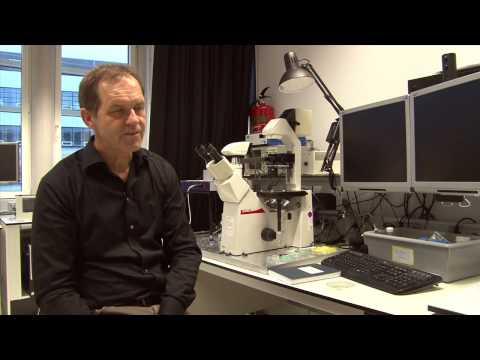 Albert van den Berg (NL)