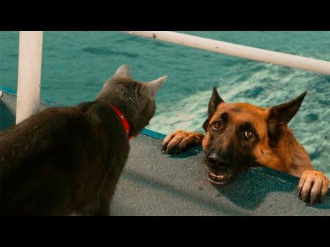 Кошка и собака — вместе навсегда (28 фото)