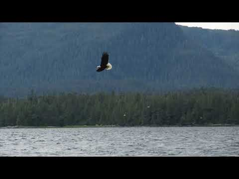 Guided Meditation: Quick Confidence Boost - Soar Like an Eagle