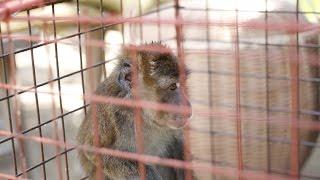 Monkey BUSINE$$ Philippines thumbnail