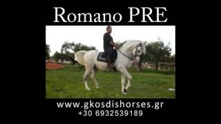 Romano - Καθαρόαιμος Ισπανικός επιβήτορας (PRE)