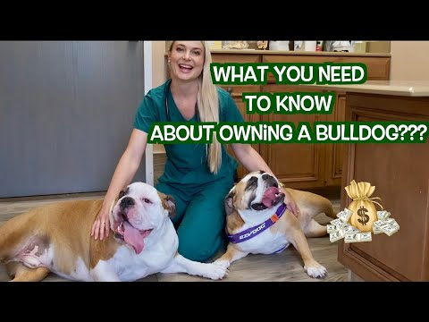 Owning A Bulldog? | What You Need To Know!