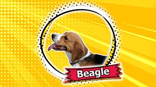 The Beagle  A Merry Little Hound Dog and Scent Hound Extraordinaire!