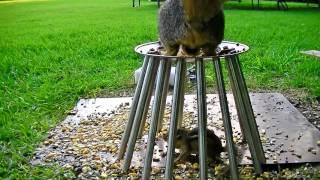 Safe Haven - Chipmunk finds safety inside a cage