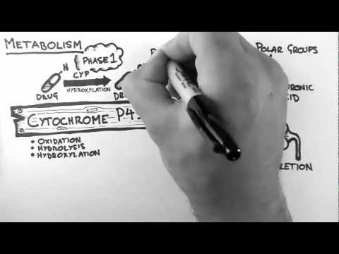 Pharmacokinetics 4 - Metabolism