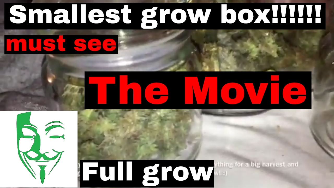 FULL Autoflower Micro grow from seed to HARVEST!!! CFL and LED grow box