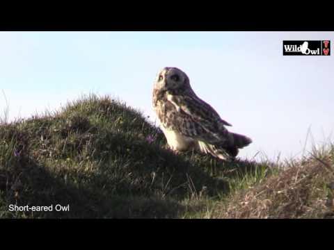 Wild Owl TV Trip to North Uist 2016