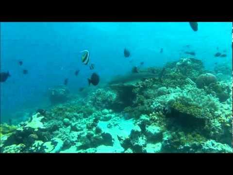 SIPADAN, KAPALAI, SIAMIL, MABUL BORNEO, MALAYSIA OCEAN SAFARI DIVE TRIP