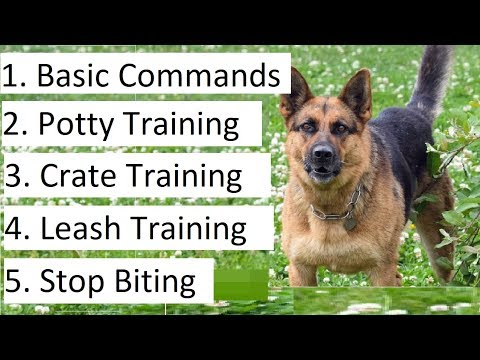 How to Train a German Shepherd Puppy - A Detailed Video on GS Training Tips
