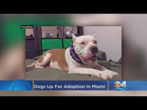 Six Delightful Doggies To Adopt Now In Miami